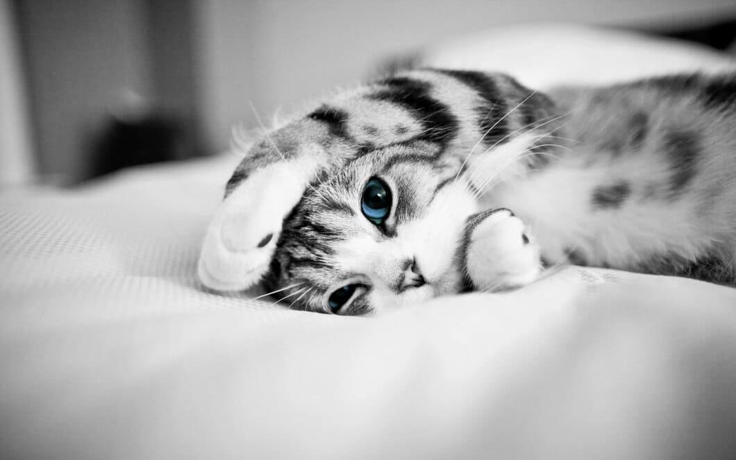 Katter lever länge