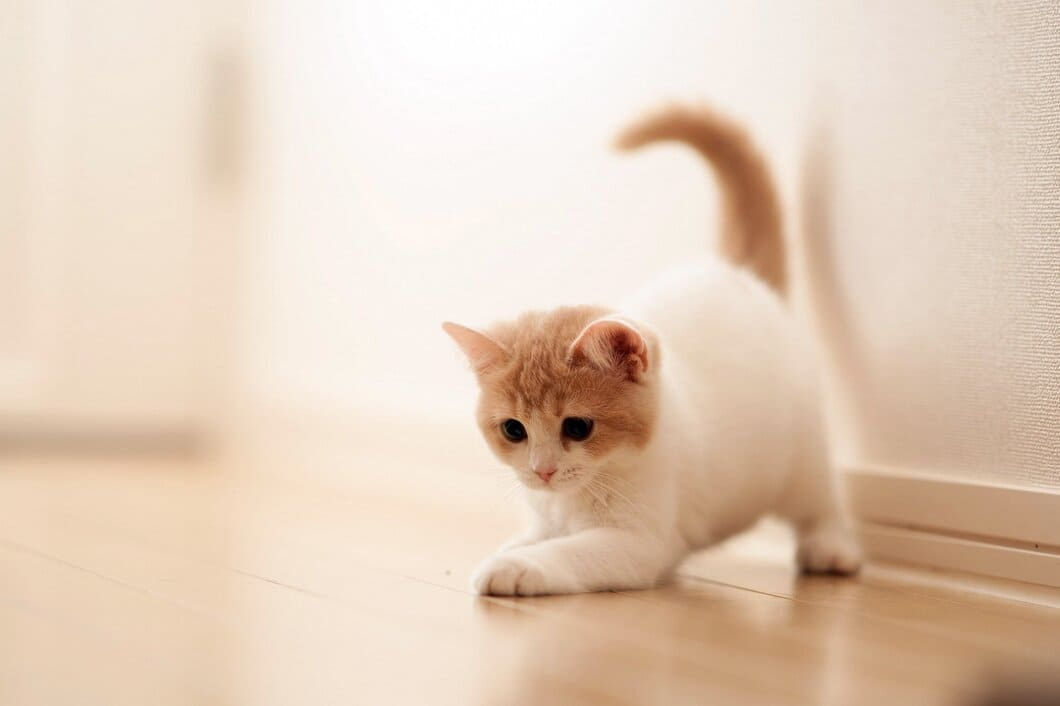 Kattungens utveckling