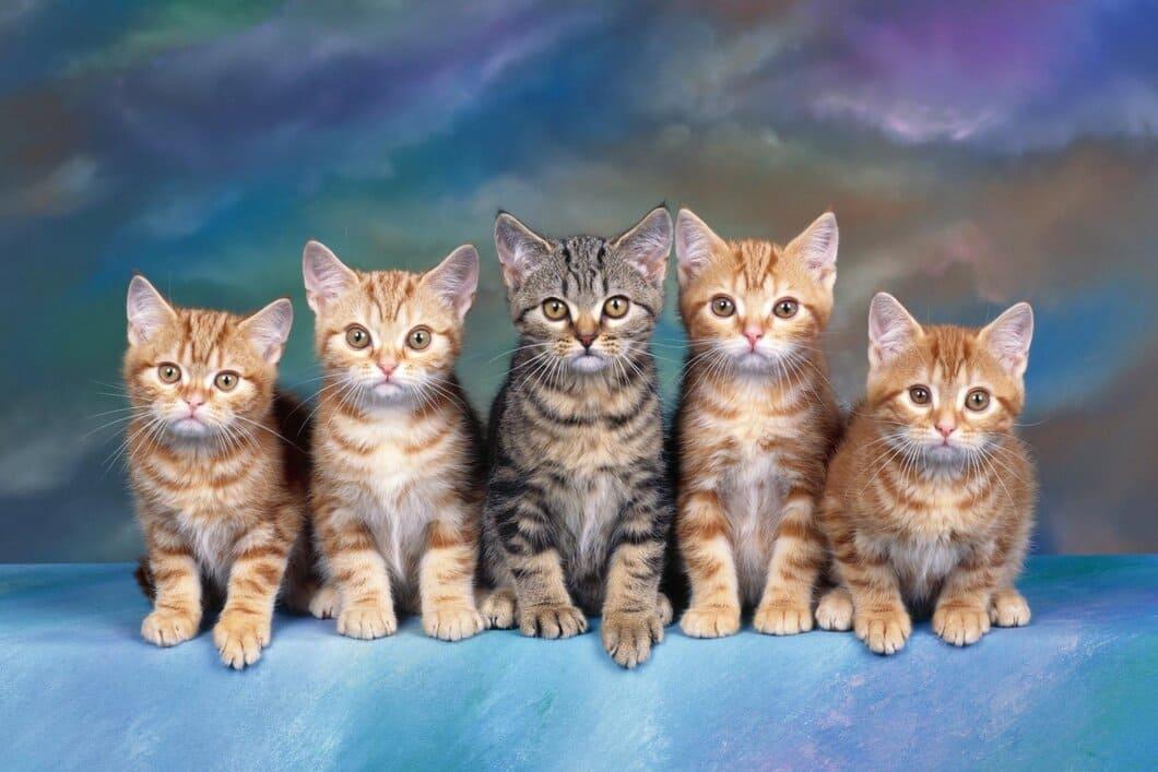 Hemlösa katter
